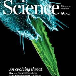 Nora Besansky-led studies featured on the cover of Science